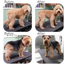 types of dogs types of dog haircuts haircuts models ideas