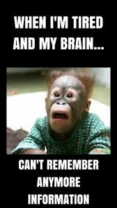 Ed Meme - inspirational 331 best mr ed images on pinterest wallpaper site