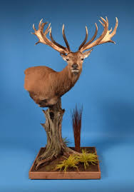 Deer Pedestal Morris Outdoors Taxidermy Award Winning Quality Taxidermy Studio