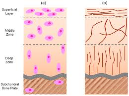 materials free full text hydrogels as a replacement material