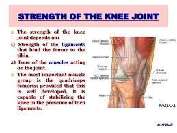 Knees Anatomy Anatomy Of The Knee Joint