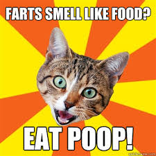 I Like Food Meme - farts smell like food cat meme cat planet cat planet