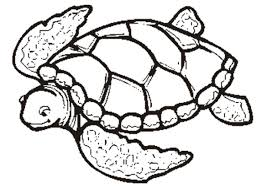 turtle coloring page fablesfromthefriends com