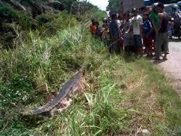 vidio film ular anaconda film ular makan buaya mary and dad episode 100