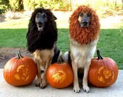 Jumbo Halloween Costumes Xl Dog Costume Etsy