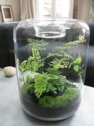 from grow little blog i adore maiden hair fern but always end up