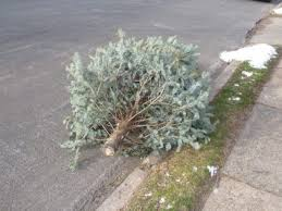 Christmas Tree Pick Up Christmas Tree Disposal Pick Ups Marple Newtown Pa Patch
