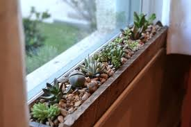 Kitchen Window Shelf Ideas Windowsill Succulent Garden Kitchen Window Sill Window Sill And