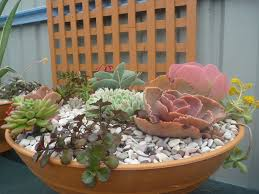 succulent plants for the garden gardening with angus