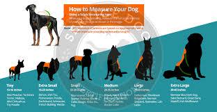 Comfort Pet Certification Alpha Service Dog Harness Vest Service Dog Certifications