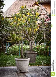 potted ornamental trees with yellow and pink flowers in a garden