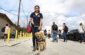 Houston In The Blind High Launches Guide Dog Training Program Houston Chronicle