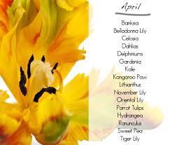 november seasonal flowers what flowers in season april
