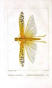 1710 insects images insects botany bugs