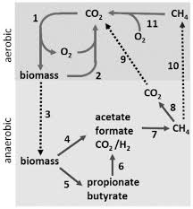 resolucion organica 5544 de 2003 notinet life free full text acetate metabolism in anaerobes from the