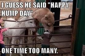 Hump Day Camel Meme - i can has cheezburger camel funny animals online cheezburger
