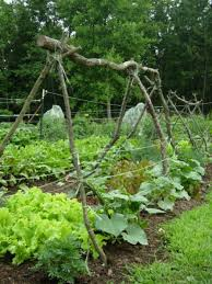 cucumber trellises here is a cuke trellis made with br