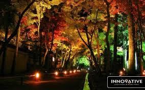 Colored Landscape Lighting Outdoor Lighting Lighting Az