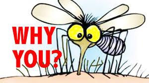 why mosquitos are biting you youtube