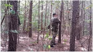 Natural Hunting Blinds Deer Hunting Blinds Summer Hunting