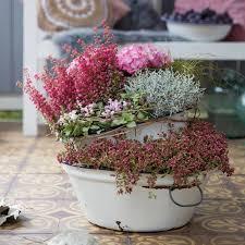 pflanzen fã r den balkon die besten 25 deko blumen ideen auf
