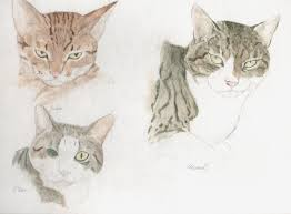 sketching a cat is never easy unless it sleeps portrait89