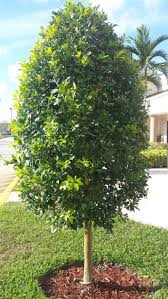 24 best south florida edging shrubs images on south