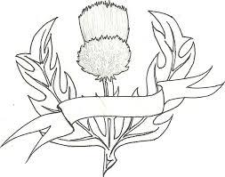 thistle design by burrakuroze on deviantart