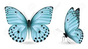 set of colorful butterflies front and side view vector