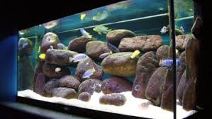 Aquascape Design Layout Complete Guide To Aquascaping Layout Style Understand Planted Fish