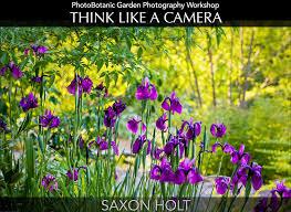 6 tips for garden photography