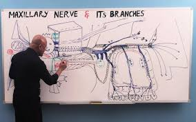 Physiology Videos Dr Najeeb Lectures World U0027s Most Popular Medical Lectures