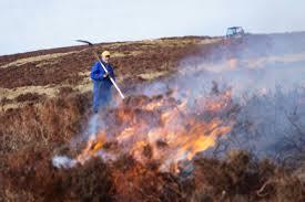 Wildfire Edinburgh Book lammermuirs moorland lammermuirs twitter