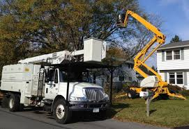 abc tree service tree removal tree service tree removal cost