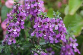 100 high heat plants 10 drought tolerant native plants