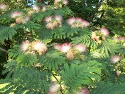 oak tree u2013 alliums to zinnias a journey of two new jersey gardeners