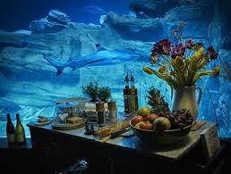 l aquarium de loue une chambre immergée dans le bassin des requins