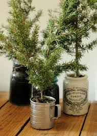 last minute mini tree in a pot