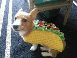 in costumes puppies on corgi corgis and animal