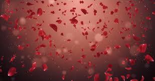 romantic flying light red rose flower petals backdrop ideal for