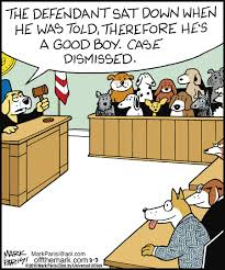 Lawyer Dog Memes - hilarious lawyer dog memes you need to see