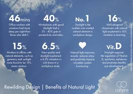 why natural light matters in the workplace opinion eco