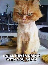 Meme Kitty - 110 lovely cat memes