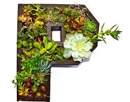 Monogram Planter P Monogram Vertical Wall Planter For Succulents Of Stunning