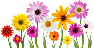 free flowers free of flowers pictures hd flower pictures free stock