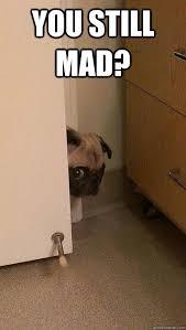 You Still Mad Meme - you still mad scared pug quickmeme