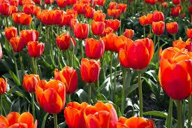 free images nature flower bloom summer orange spring green