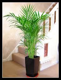 indoor plants india services indoor plants on rent services from delhi india by anil