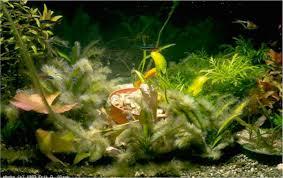 aquarium design exle the war on algae miyabi aqua design