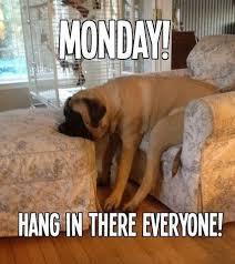 Mondays Meme - dog meme monday funny dog memes bullwrinkles dog treats